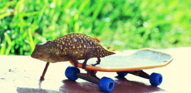 Tiny skateboards, or, what to expect if you follow me on Pinterest