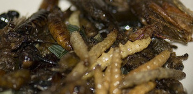 Eat This! Insects could be a good source of protein
