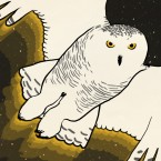 """A promo image for the Skunk Bear micro-doc, """"Secrets Of The Snowy Owls."""""""