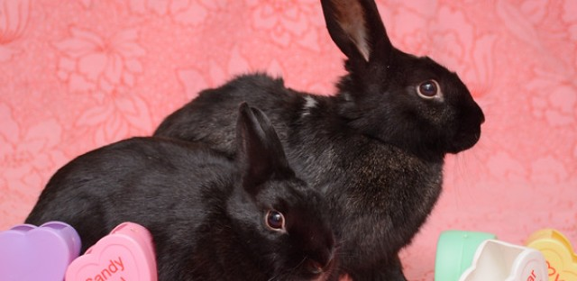 Why Easter bunnies don't make the best pets