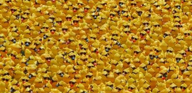 Duck. Duck... Rubber duckies swarm Chicago River by the thousands for Special Olympics fundraiser