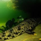 Smile, Crocodile! Up Close With A Predator