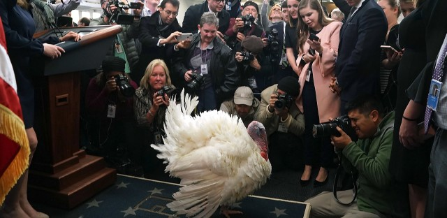 Wishbone, the turkey, meets the press in the White House briefing room Tuesday. The other turkey, Drumstick, will be the one to appear at the ceremonial pardoning, but both will get a reprieve.