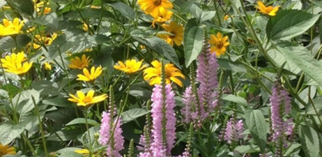 Elections in Alberta and landscaping with native plants