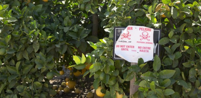 Pesticide warning sign in an orange grove.