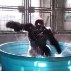 Gorilla pool