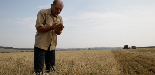 Russia Wheat Drought Download Comp                                                  Tag as...                         Cancel Apply                         Back to search results105of375 results                         RUSSIA WHEAT DROUGHT                         Overview Download now                                                   Product manager of Niva (Field) agriculture company Vladimir Kiselyov checks ears of barley in a field near the village of Uzunovo in Moscow region, 170 km (105 miles) south of Moscow, Wednesday, Aug. 11, 2010.