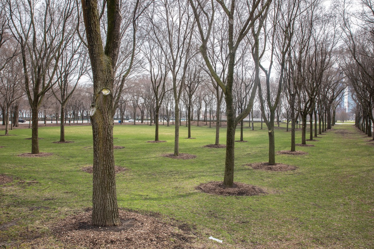 A view of an empty Grant Park through the trees.