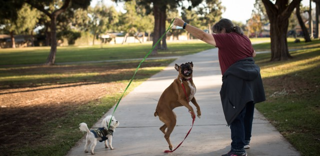 Kathy Klute-Nelson walks through her neighborhood with her dogs in Costa Mesa, Calif. She was offered $300 off her yearly health insurance premiums if she committed to walking every day.