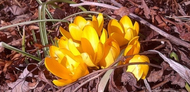 Warmer winters, climate lead to early blooms
