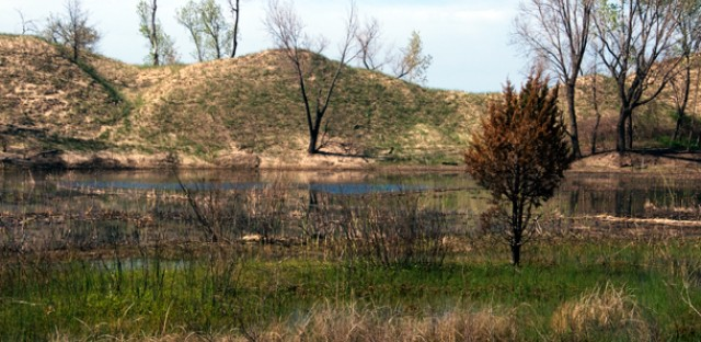 One of the pannes in Marquette Park, along the Indiana Dunes National Lakeshore. Wetlands nestled between lakeshore sand dunes, the fragile ecosystems foster biodiversity.