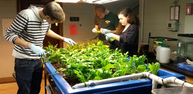 Aquaponics programs in Chicago, like this one at Lane Tech High School, help bring fresh local produce to Chicagoans all year long.
