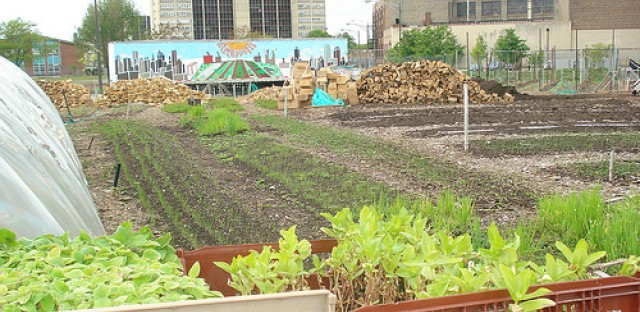 Proposed Chicago zoning change to cut red tape for urban agriculture