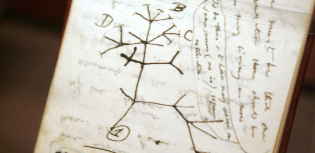 "A copy of Charles Darwin's ""B notebook"", in which he wrote the words ""I think"" and drew a simple evolutionary tree is on display during a press preview of ""Darwin"" at the American Museum of Natural History in New York."