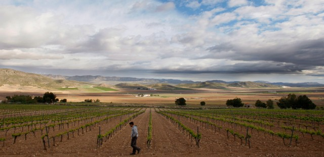 A man walks through the Casa de la Ermita vineyards in Jumilla, near Murcia, Spain, Wednesday, April 9, 2008.