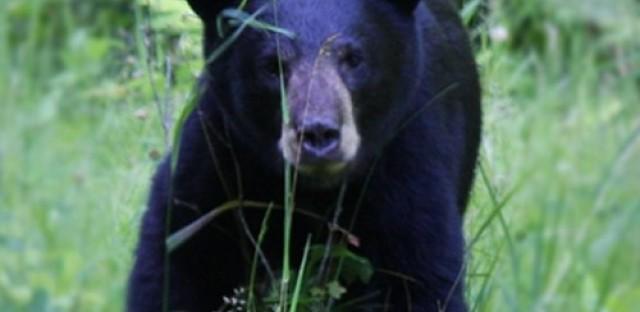 EcoMyths: Wild predators belong anywhere but here