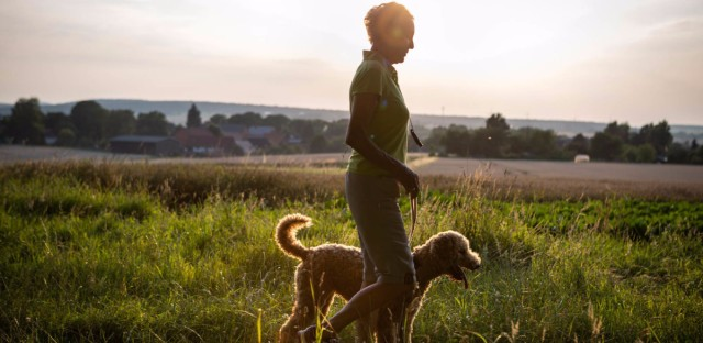 Older adults who own dogs walk more than those who don't own dogs, and that they're moving at a good clip, a study finds. (fotografixx/Getty Images)