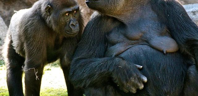 StarTalk Radio : Extended Classic – Cosmic Queries: Primatology Image