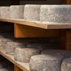 Cheese rounds cure in the aging room at Chapel's Country Creamery in Easton, MD.