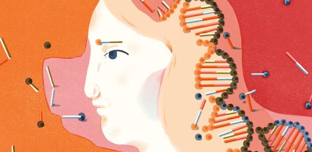 chimeric embryos illustration