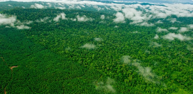 A forest eaten away by oil: The Borneo rain forest has been clear-cut faster than any other tropical forest, with nearly a third destroyed since the 1980s. Large companies and small shareholders have turned a big chunk of that land into palm oil plantations.