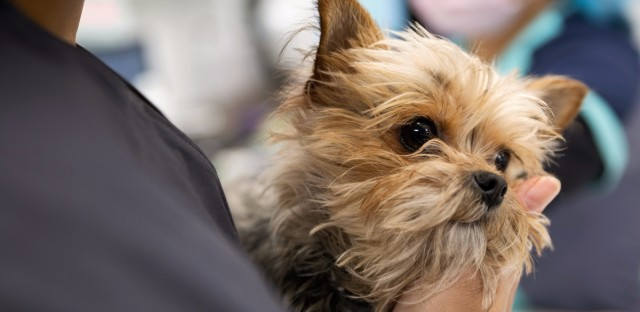 Veterinarians say that helping suffering animals and stressed-out owners can become grueling.