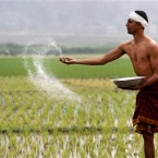 An Indian farmer sprays fertilizer at his paddy field in Burha Mayong east of Gauhati, India in February  2012. Agriculture is the source of livelihood for around 115 million farming families, about 70 percent of India's population.