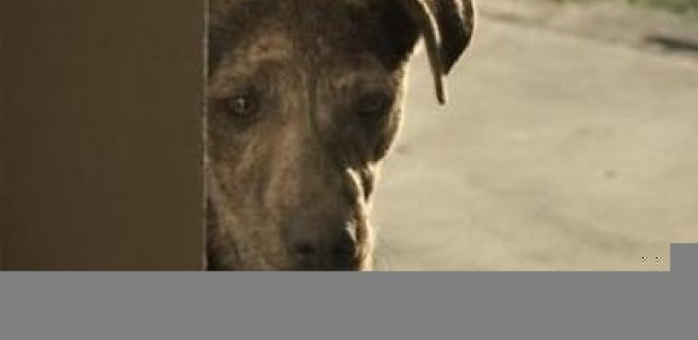 Rich dog, poor dog: Foreclosures fill animal shelters while high-end pet products take off