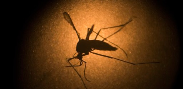 Zika Virus Affecting Blood Donation Policies