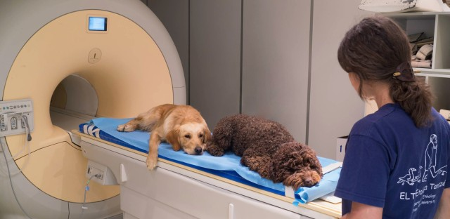 Dogs were trained to lie motionless inside a scanner and listen carefully to human speech.