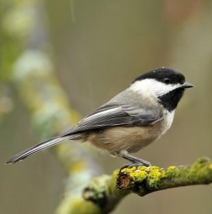 Birdwatching COVID-19 Thumbnail