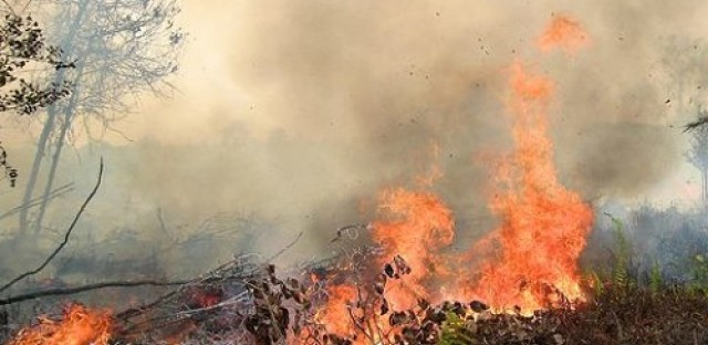Indonesia's controversial forest fires