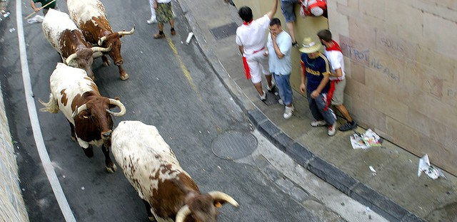 """Thrill seekers dodge and run away from droves of bulls in Pamplona, Spain. The Great Bull Run brings the Spanish """"Running of the Bulls"""" to Chicago next year. It includes 24 bulls chasing participants around a quarter-mile track at the Hawthorne Race Course."""