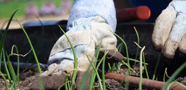Morning Shift: Gardening tips to kick off the first day of spring