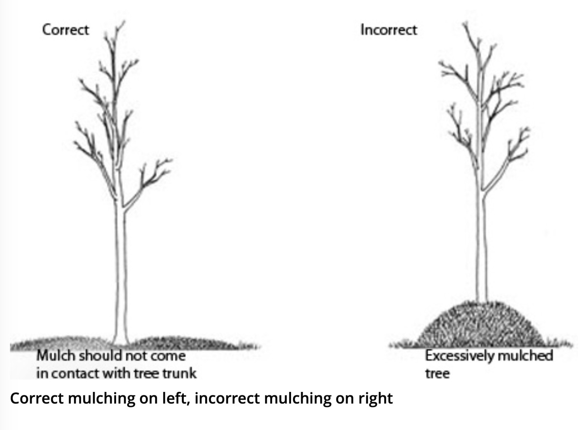 mulch diagram