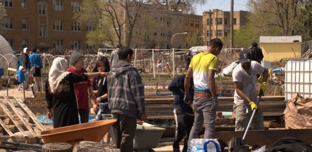 Refugees raise vegetables, put down roots at urban garden