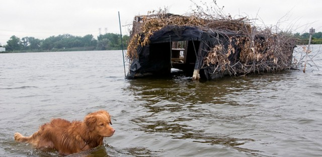 Buddy the dog and a duck blind on Wolf Lake near the Illinois and Indiana state border.