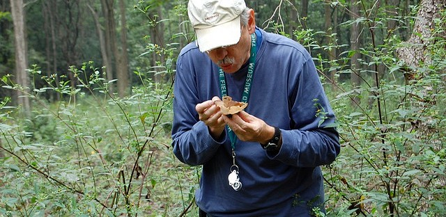 Mycologist Dr. Gregory M. Mueller blows on mushroom during Illinois Mycological Association foray