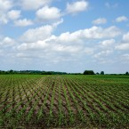 On Point with Tom Ashbrook : Inside The Farm Bill: Subsidies For Farmers, Boost For Hemp And More Image