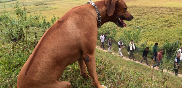 During a weekend run in the Kathmandu Valley of Nepal, Biko and his owner paused as a funeral procession passed by.
