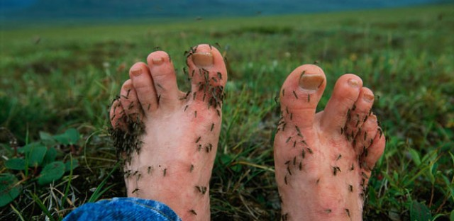 Feet and ankles are a feast for mosquitoes.