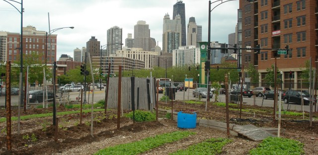 In July, Mayor Emanuel introduced an ordinance that would make urban agriculture a new zoning designation in Chicago.
