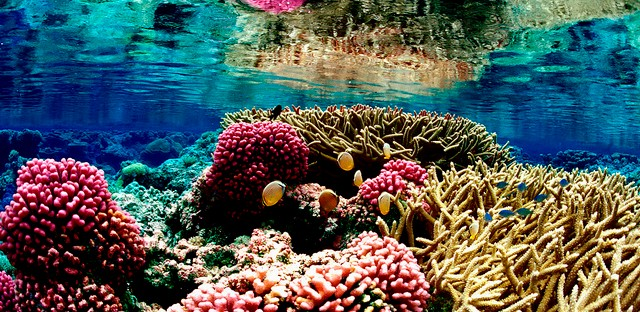 Coral reef ecosystem at Palmyra Atoll National Wildlife Refuge.