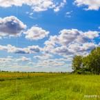 Sunflower fields near the village of Kryachkivka