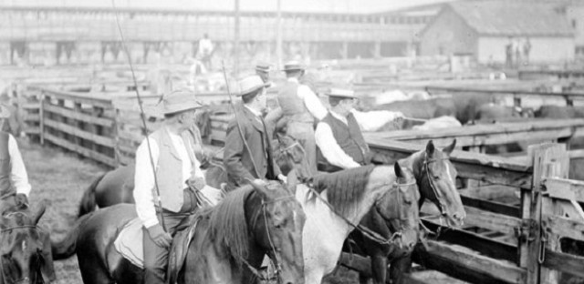 Stock Yard drovers, 1904