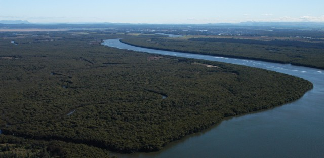 A mangrove forest in New South Wales, Australia.