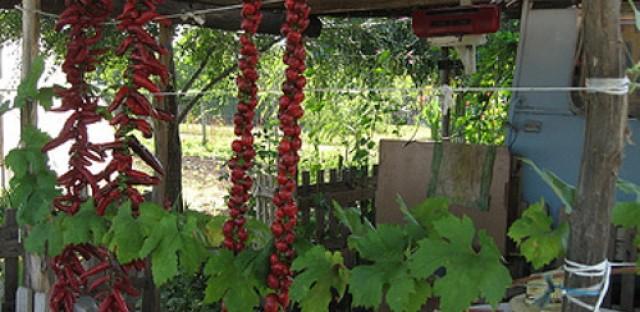 Gardening Advice with author and master gardener Jeanne Nolan