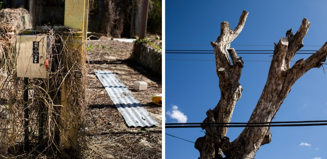 An long-abandoned water filtration plant and a tree with an attached sign labeling it as dangerous. Though dead, the tree stands precariously beside utility cables and a house in Camuy.