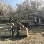 Earlier this year, beekeeper Brian Hiatt had millions of bees working to pollinate almond trees across California.