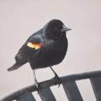 bird bird!